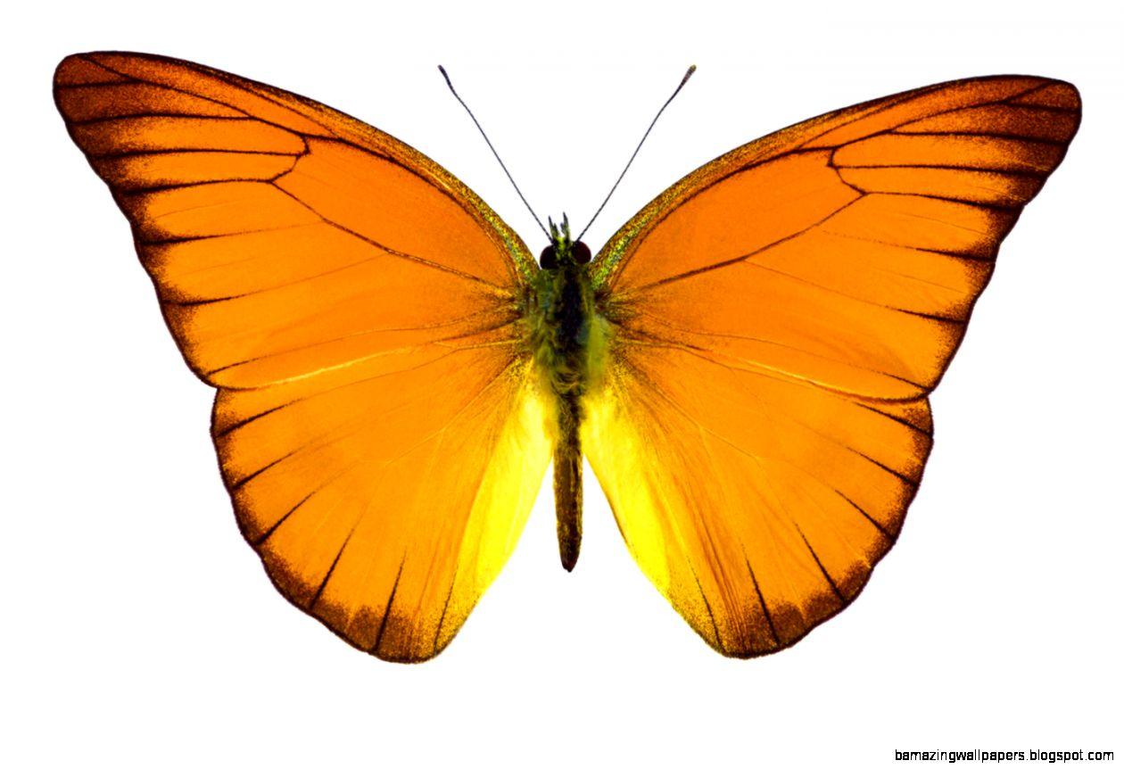 In emdr butterfly sends away moth good bye death for Orange mobel